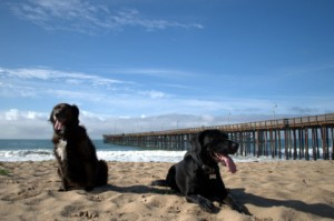 My pups: Kiara on the left (border collie), Ronan on the right (lab). Photo taken at Ventura pier.